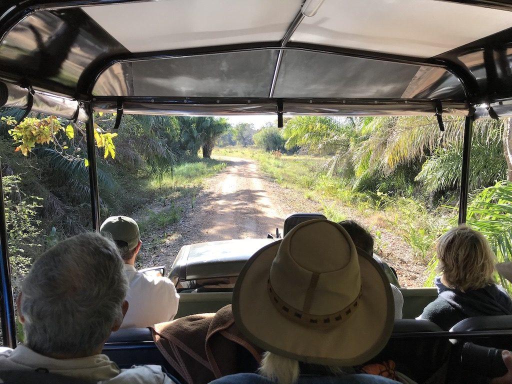 Safari au Pantanal